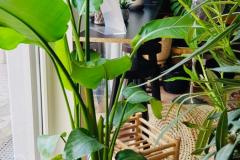 oliandre-Organic-Beauty_Natural-Living_45